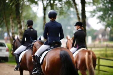 Die Turnierausrüstung für Pferd und Reiter