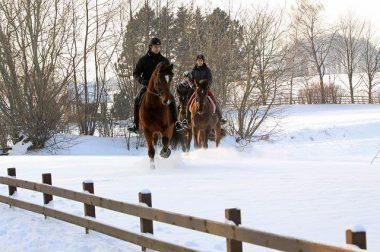 Herzlich Willkommen – So halten sich Pferd und Reiter im Winter fit