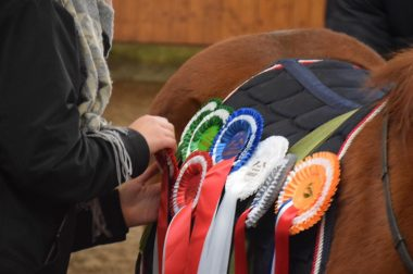 Zeiteinteilung & Pferdeliste Januar 2020
